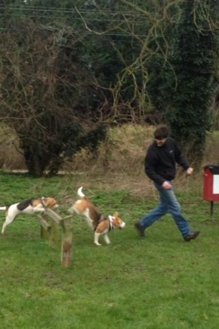 Dog walk at Lea Valley Country Park Dog Agility Course photo