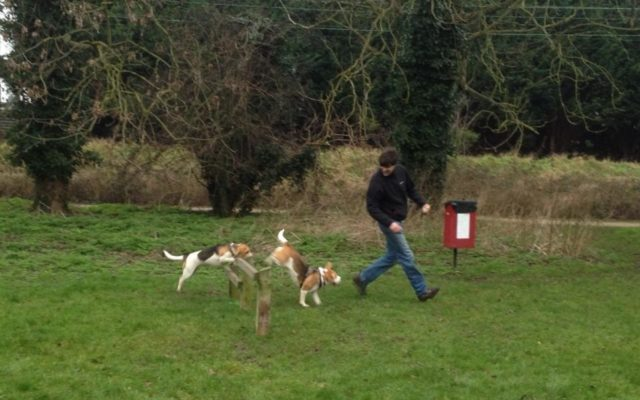 Lea Valley Country Park Dog Agility Course Dog walk in Hertfordshire
