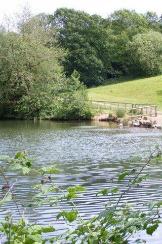 Dog walk at Leasowes Park photo