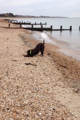 Dog walk at Lee On The Solent Beach photo