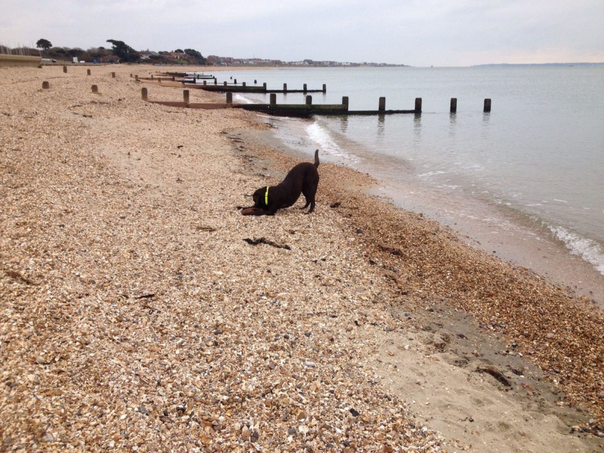 Lee On The Solent Beach large photo 1