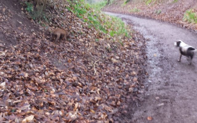 Leigh Woods Dog walk in Bristol (City of)