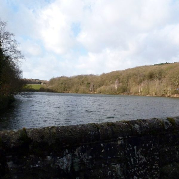Dog walk at Linacre Reservoirs