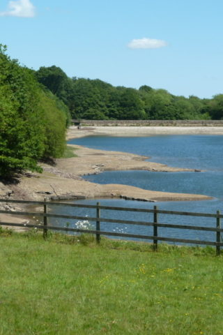 Dog walk at Linacre Reservoirs photo