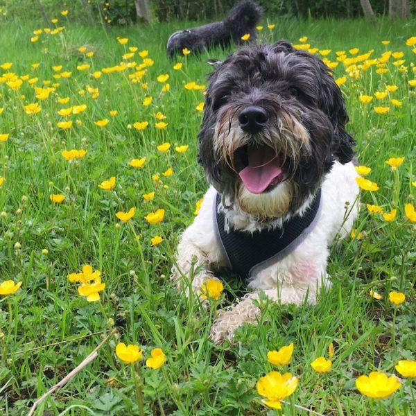 Dog walk at Linby Trail