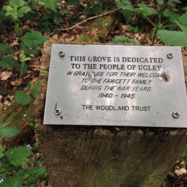 Linnets Wood, Ugley photo 4