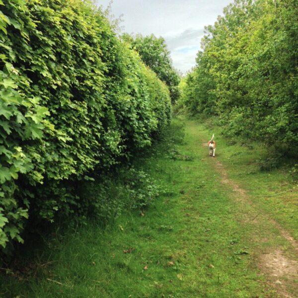 Linnets Wood, Ugley photo 5