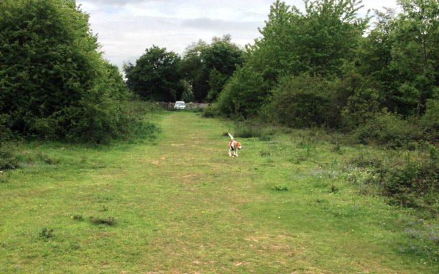 Linnets Wood, Ugley Dog walk in Essex
