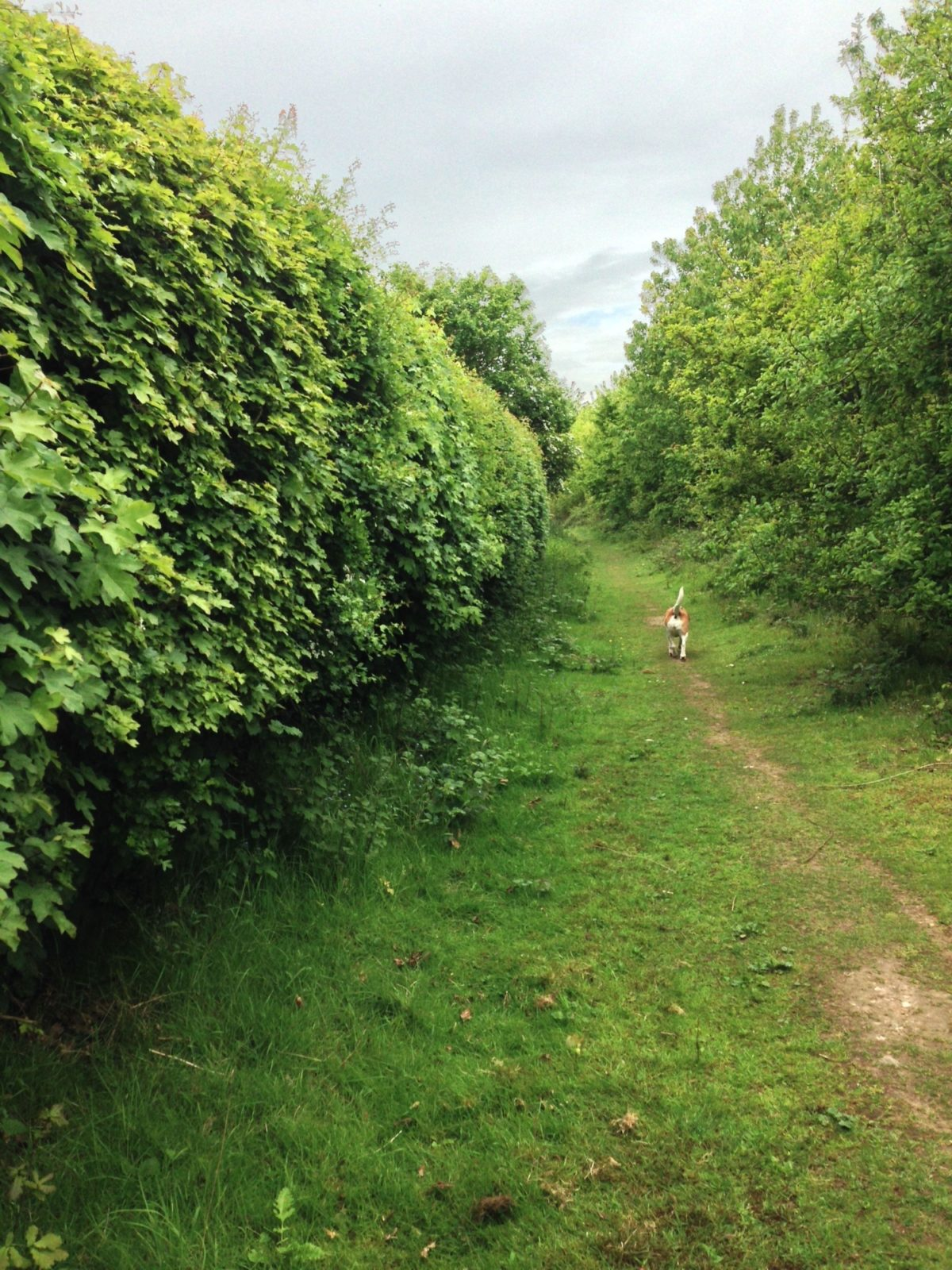 Linnets Wood, Ugley large photo 5