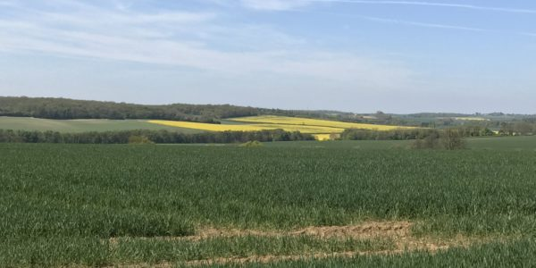 The Outskirts of Elmdon