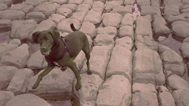 Dog walk at Llanwit Major Beach