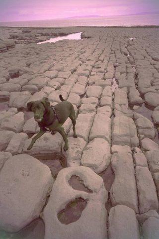 Dog walk at Llanwit Major Beach photo