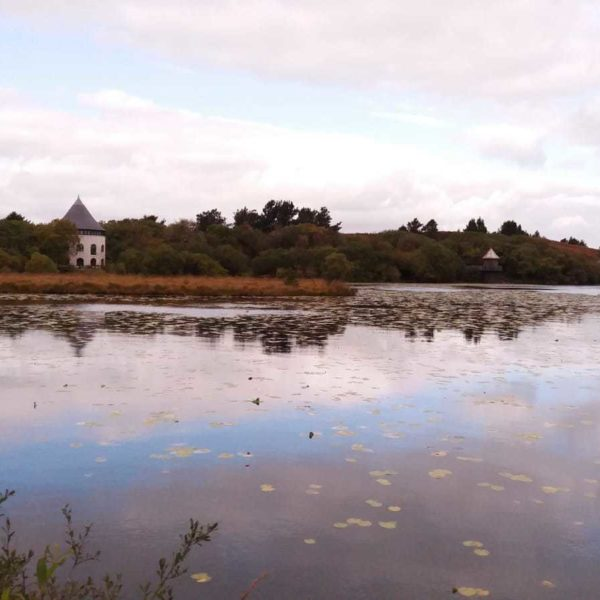 Dog walk at Llyn Llech Owain Country Park