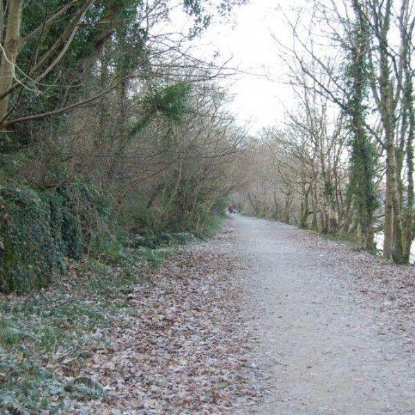 Dog walk at Llyn Padarn, Llanberis