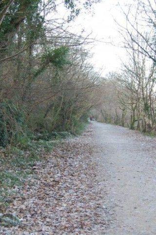 Dog walk at Llyn Padarn, Llanberis photo