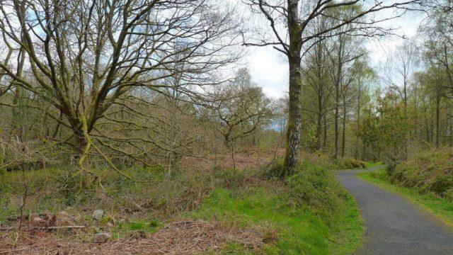 Dog walk at Loch Ard Queen Elizabeth Forest Park