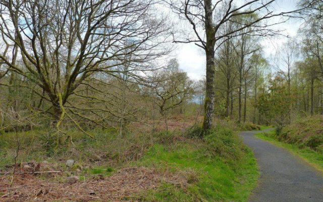 Loch Ard Queen Elizabeth Forest Park Dog walk in Stirlingshire