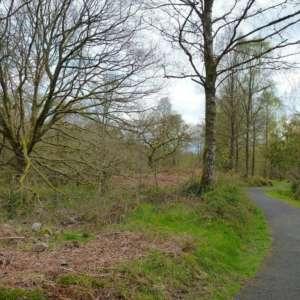 Loch Ard Queen Elizabeth Forest Park