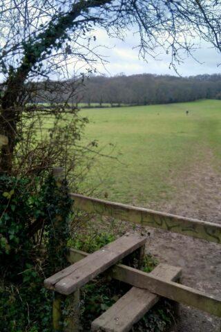 Dog walk at Lockerley - Spearywell photo