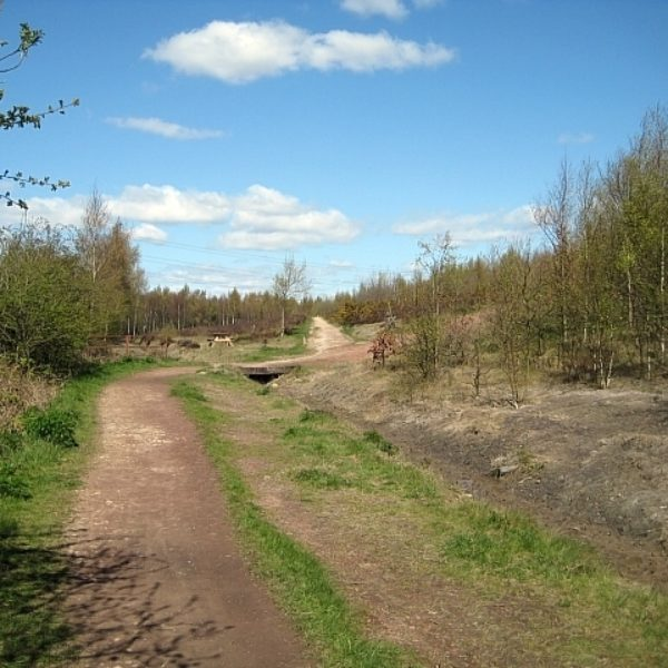 Dog walk at Lofthouse Colliery Nature Park