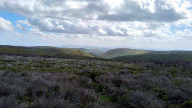 Dog walk at Long Mynd