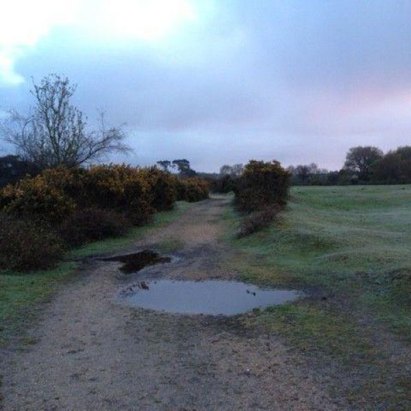 Dog walk at Longdown (New Forest)