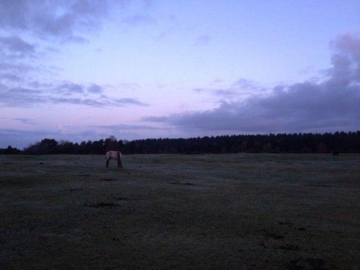 Longdown (New Forest) large photo 6