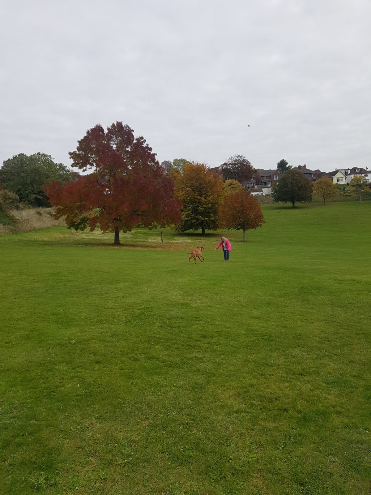 Loop walk by Salisbury Rugby Club and Victoria Park large photo 2