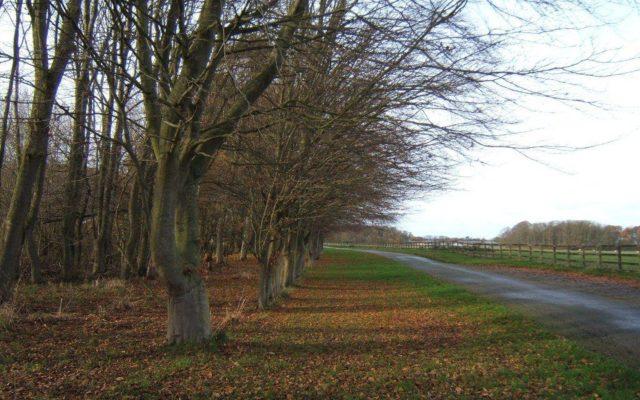 Lytham Hall Dog walk in Lancashire