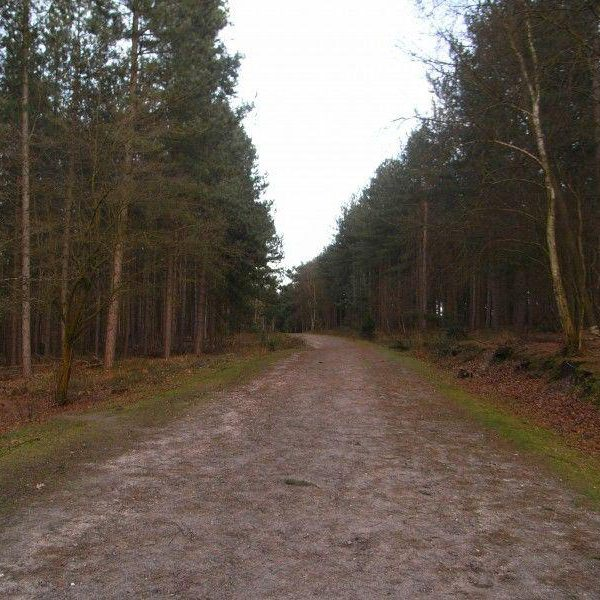 Marchwood Inclosure photo 3
