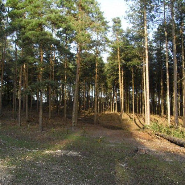 Marchwood Inclosure photo 8