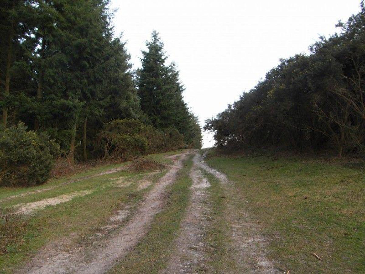 Marchwood Inclosure large photo 6