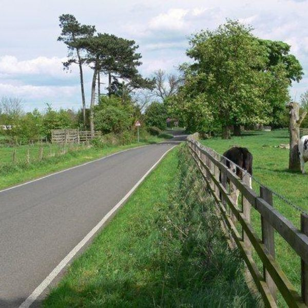 Dog walk at Market Bosworth Country Park