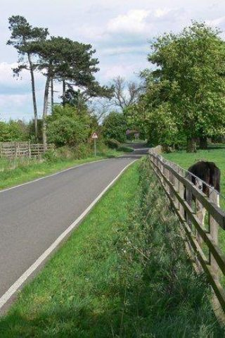 Dog walk at Market Bosworth Country Park photo
