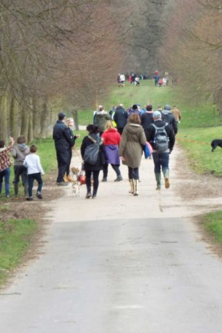 Dog walk at Marks Hall Estate, Heli Hounds photo