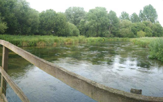 Martyr Worthy River Walk Dog walk in Hampshire