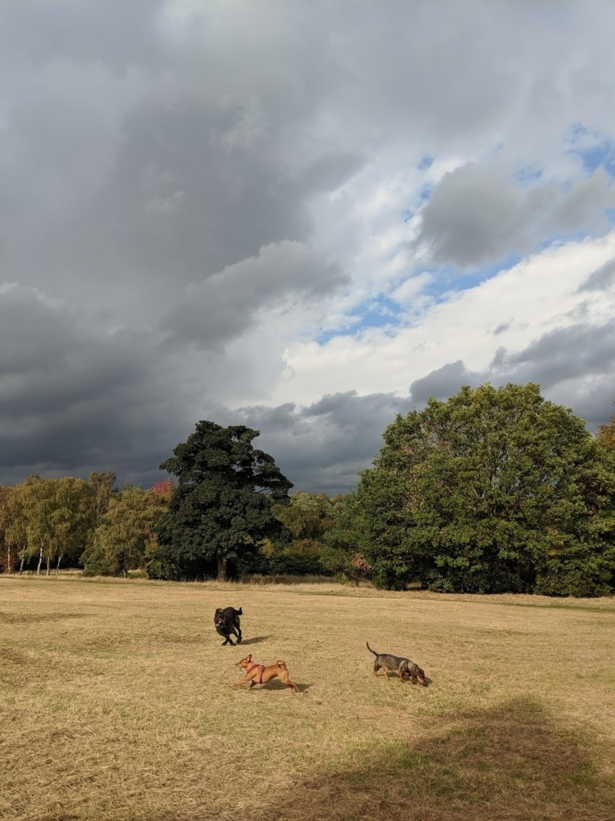 Middleton Park large photo 1