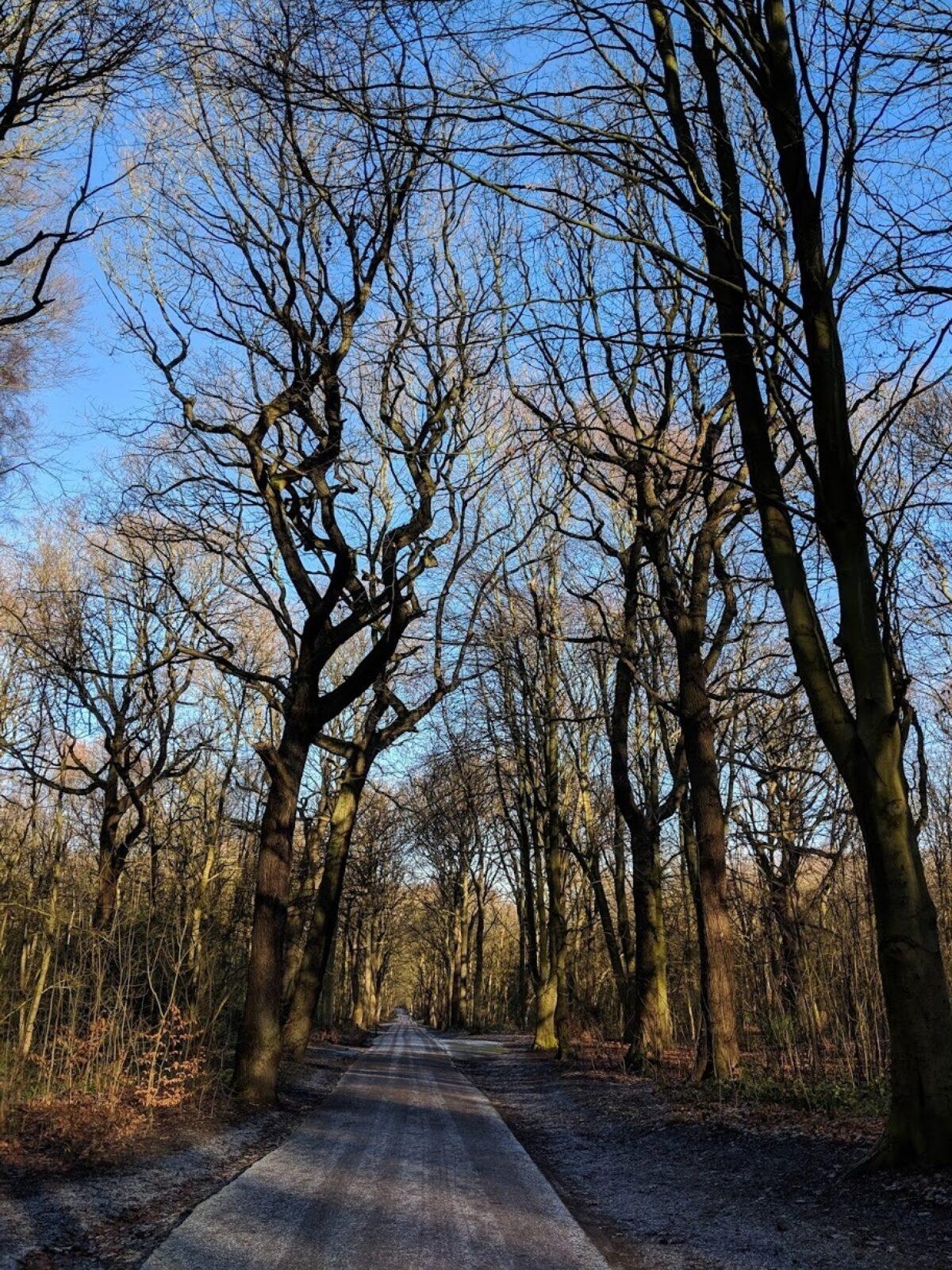 Middleton Park large photo 6