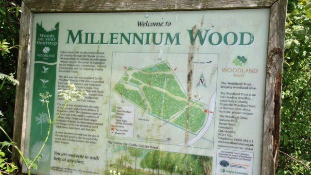 Dog walk at Millennium Woods, Castle Camps