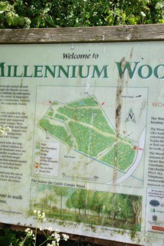 Dog walk at Millennium Woods, Castle Camps photo