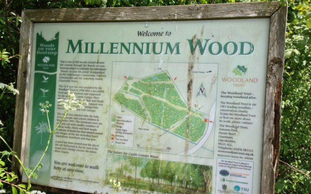 Millennium Woods, Castle Camps Dog walk in Suffolk