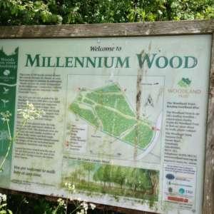 Millennium Woods, Castle Camps
