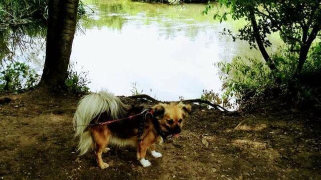 Dog walk at Millennium Woods Henlow