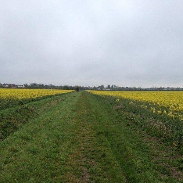 Dog walk at Mills Lane, Witchford