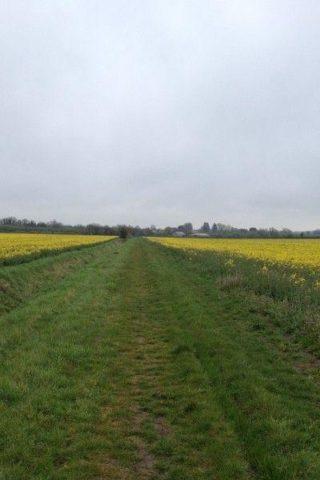 Dog walk at Mills Lane, Witchford photo