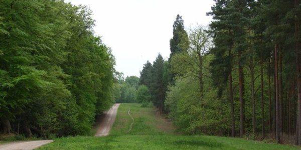 Shepherd Meadows