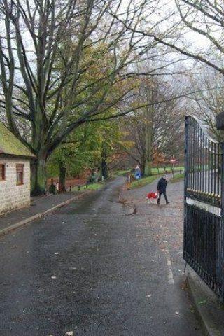 Dog walk at Mote Park photo