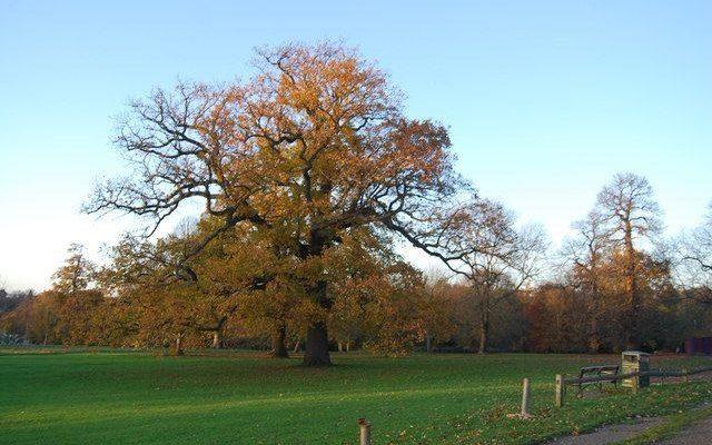 Mote Park Dog walk in Kent