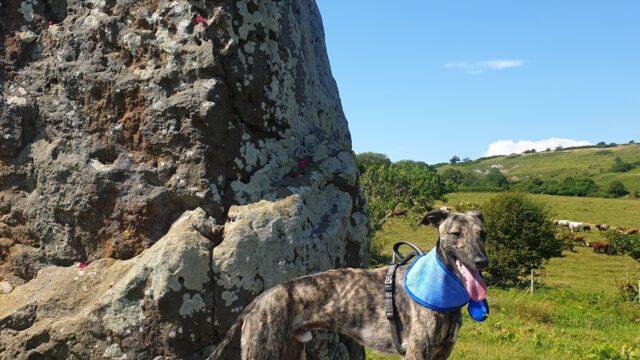 Dog walk at Mottistone Meander: Climb to the Common