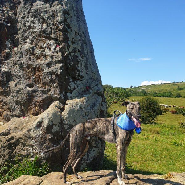 Mottistone Meander: Climb to the Common photo 1